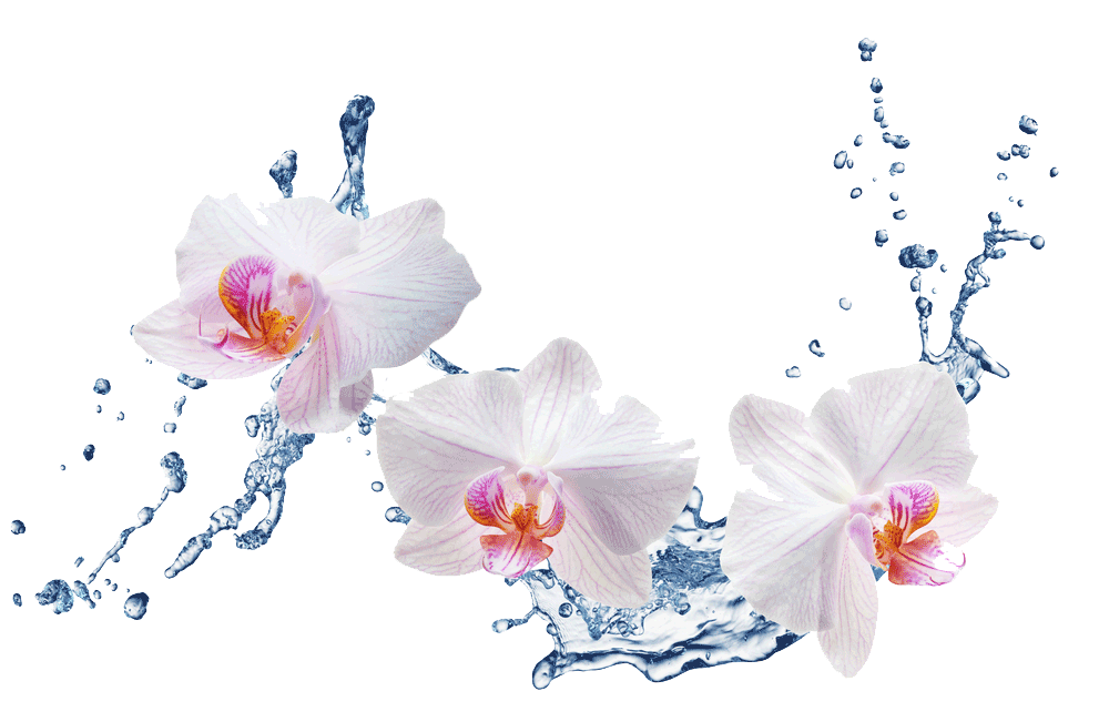 Flowers with water splashing – Eatonslater.com Health food & online health store
