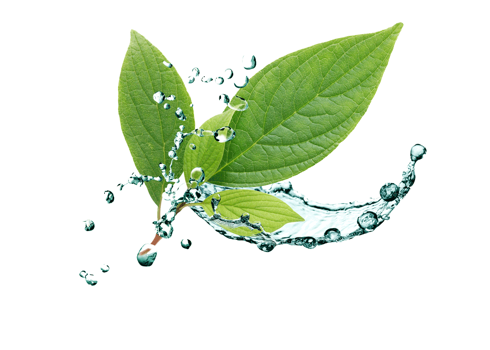 Leaf with water splashing – Eatonslater.com Health food & online health store